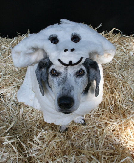 Wolf in Sheep's Clothing Photo by http://www.petsadvisor.com (This pic is way too cute for this post but I couldn't pass it up.)