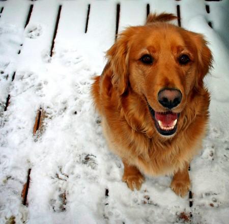 Happy Dog Photo by digital_image_fan