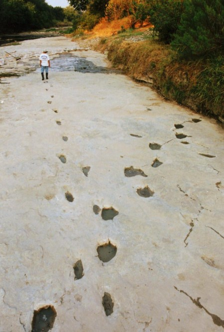 Dinosaur and human Footprints in the Paluxy Riverbed