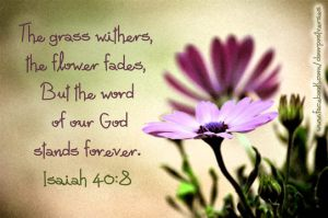 The Grass Withers 2 ~ CHRISTian poetry by deborah ann ~used with permission DoorPost Verses