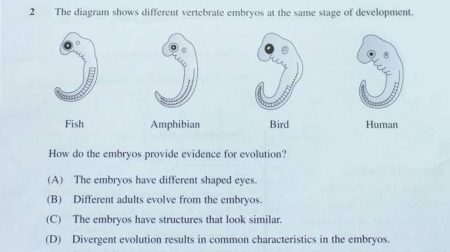 The biology paper in the Higher School Certificate exam on 19 October 2012, a major public matriculation exam in New South Wales, Australia, contained a question featuring Haeckel's fraudulent embryo drawings Photo from Creation.com